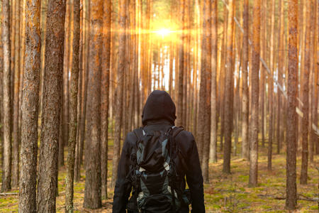 Backpacker man looks at sunrise in a pine forest. Back view. Copy space