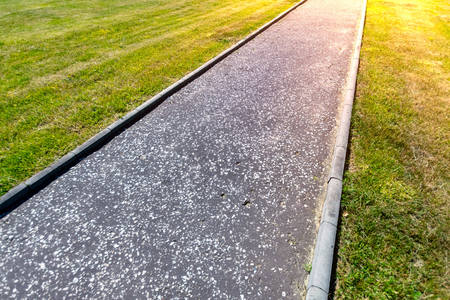 Sidewalk between manicured mowed lawn in public park with light flare. Stock Photo
