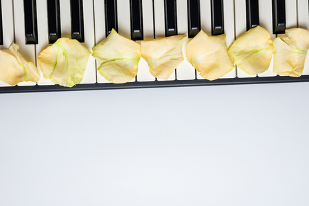 Piano keys with white rose flower petals, isolated, top view, copy space. Romantic concept. Piano or synthesizer keyboard. Classical music instrument for playing romantic music.
