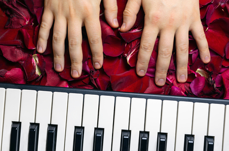 Pianist hands on red rose flower petals. Romantic concept with piano keys, top view. Classical music instrument for playing romantic serenade for sweet darling girl for valentines day.