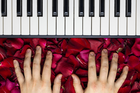Pianist hands on red rose flower petals. Romantic concept with piano keys, top view. Classical music instrument for playing romantic serenade for sweet darling girl for valentine's day.