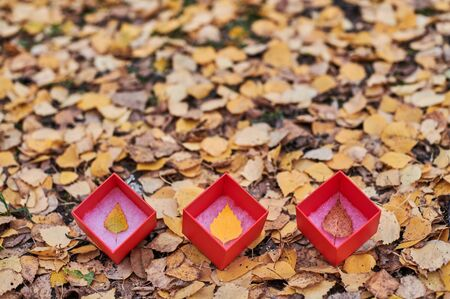 Three box with autumn leaves. Seasons of year change concept, copy space. Weather forecast change symbol