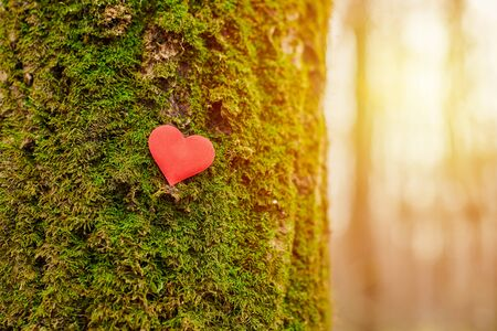 Heart on tree. Environment protection symbol, copy space. Deforestation or arboriculture tree love concept. Save forest and nature.