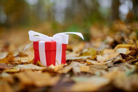 Autumn gift. Gift box in fallen leaves, copy space. Present for a special occasion: anniversary, birthday, wedding, honeymoon, Christmas or Valentines day.