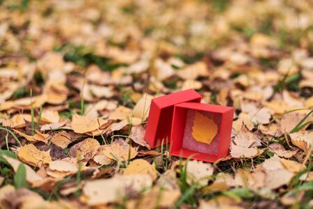 Gift box with autumn leaf. End of season concept, copy space. Weather forecast change symbol Reklamní fotografie