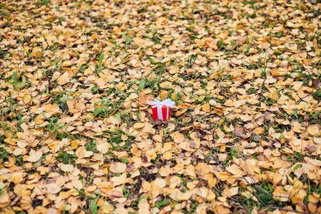 Gift box in autumn fallen leaves on ground in park, copy space. Present for a special occasion: anniversary, birthday, wedding, honeymoon, Christmas or Valentines day. Reklamní fotografie
