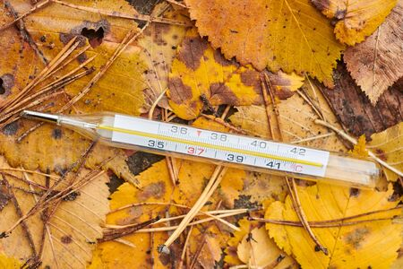 Autumn flu illness concept. Thermometer on autumn leaves background. High risk of flu.