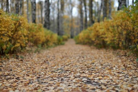 Autumn park pathway. Beautiful forest alley with fallen leaves. Calm weather. Season change time. No people.