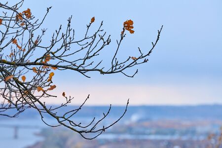 Autumn branches with fallen leaves. Gloomy design copy space, sky background. Season change time.