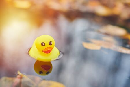 Duck toy in autumn puddle with leaves. Autumn symbol in city park. Fairweather or cloudy weather concept. Imagens