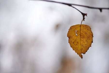 Autumn leaf on branch, copy space. Season change or weather forecast symbol. Foliage in city park tree