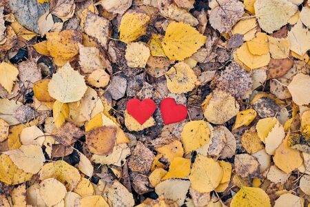 Two hearts in autumn forest. Love or friendship concept. Symbol of marriage, honeymoon and Valentine day. Beautiful autumn background, copy space.