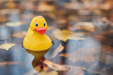 Duck toy in autumn puddle with leaves. Autumn symbol in city park. Fairweather or cloudy weather concept. 스톡 콘텐츠