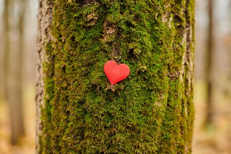 Heart on tree. Save forest and nature. Environment protection symbol, copy space. Deforestation or arboriculture tree love concept.