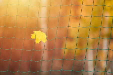 End of sports season concept. Soccer goal net with autumn leave. Dreams of winning a sports competition: football, soccer, rugby, tennis, baseball, american football, field hockey and other.