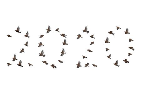 Sparrow flock flying in sky, isolated, 2020 year shape. New year concept. Group of small birds. Stock Photo