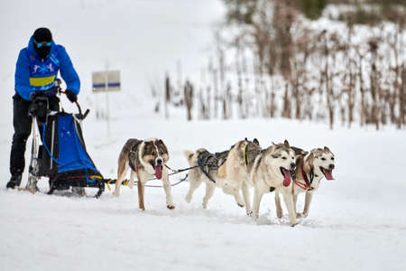 Husky sled dog racing. Winter dog sport sled team competition. Siberian husky dogs pull sled with musher. Active running on snowy cross country track road Standard-Bild