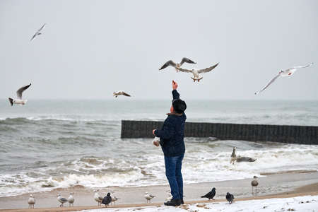 Lonely old man feeding gulls, seagulls and other birds at sea. Back view of person, cloudy winter landscape.