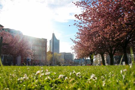 Beautiful Picture with cherry blossoms at springtime in Leipzig