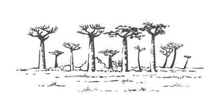 Beautiful Baobab trees in Madagascar. Landscape with unusual trees. Madagascar hand drawn sketch illustration. Isolated on white background.