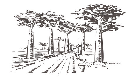 Road through baobab trees, Madagascar. Hand drawn Madagascar sketch illustration. Isolated on white background.