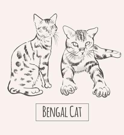 Bengal Cat hand drawn sketch