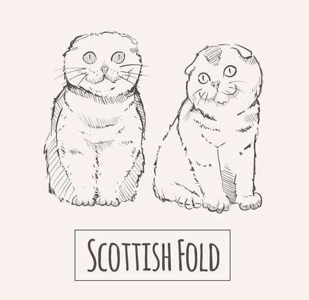 Scottish Fold cats, sketch hand drawn