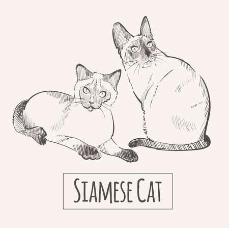 Siamese cats sketch vector illustration art animal
