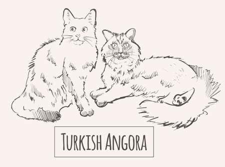 Turkish cats sketch vector illustration art animal 向量圖像