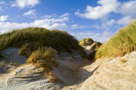 A sunny sand dune in New Zealand