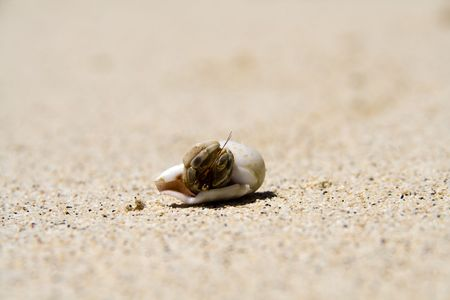 a hermit crab hiding in its shell photo