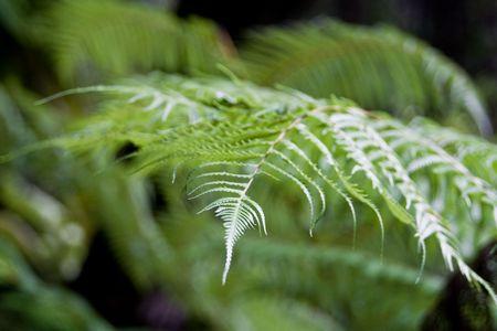 Green Fern in the Costa Rican Jungle photo