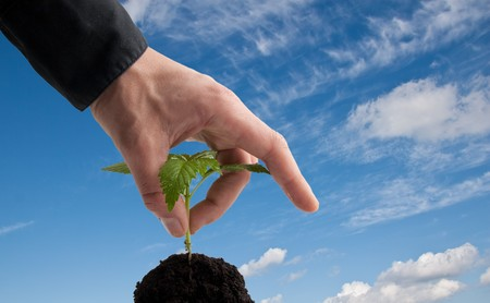 young plant and hand with blue sky in the backgrounf Stock Photo - 7117691