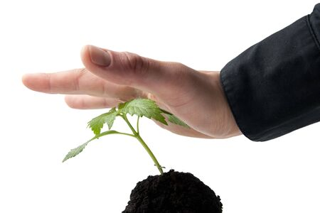 hand in business shirt pushing a plant down Stock Photo