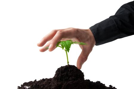 young sprout in top soil being taken by a business man Stock Photo - 7117685