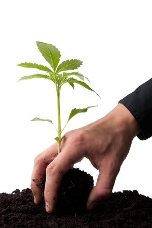 young sprout in top soil being taken by a business man