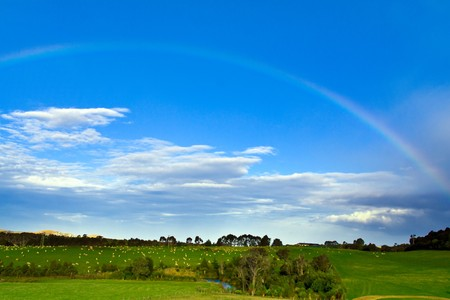colorful thin rainbow under blue sky and over green grass