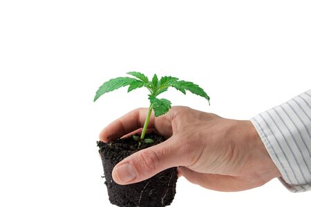 hands in a business shirt holding a young sprout in soil