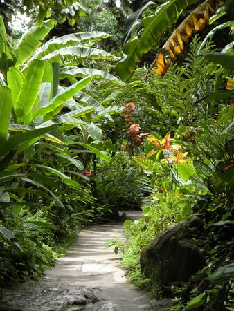 st lucia: Diamond Falls Botanical Gardens, St. Lucia Stock Photo