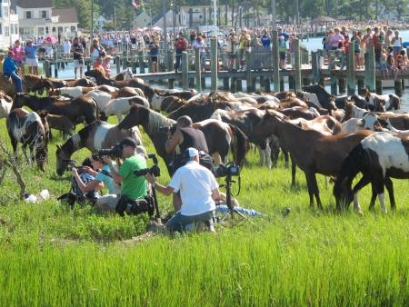 pony voorbij grensovergang fotografen