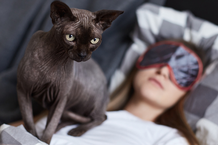 blinder: Dont disturb. Young lady is sleeping in her bad wearing eye mask. Her cat sphinx is on her chest ready to attack anyone who comes closer. Focus on cat. Human and animal concept.
