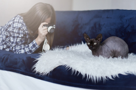Wit en blauw gekleurd beeld. Portret van de grijze kat van de sfinx poseren bij witte sofa deken op zoek naar voren. De jonge vrouw maakt erachter foto van haar oosters huisdier. Mens en dier concept.