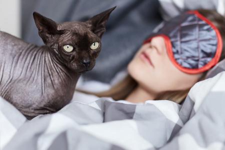 Sluit omhoog geschoten van sfinxkat die jonge slaapdame in haar bed in grijs en wit linnen bewaken. Focus op kat. Thuis, gezellig, vrijblijvend concept.