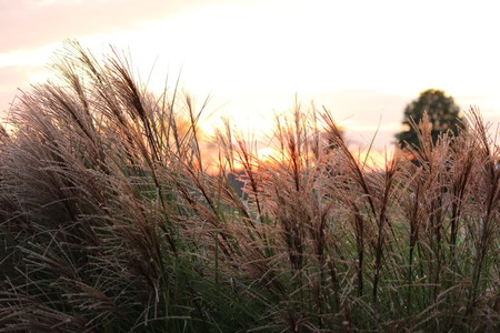 grasses in the wind Imagens