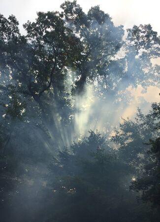 Sun through misty treetops