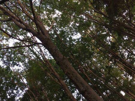Summertime woods Banco de Imagens