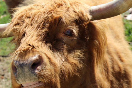 animal watching: Bull Cow