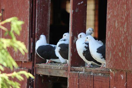 animal watching: birds watching Stock Photo
