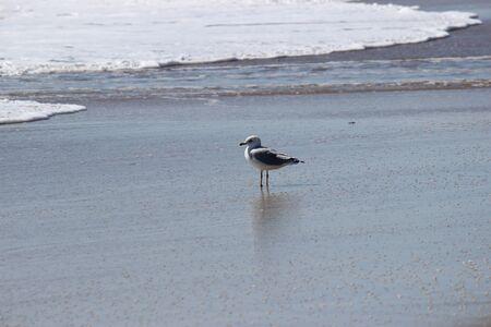 seagull at the ocean Banco de Imagens