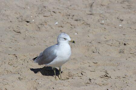 seagull in the sand Banco de Imagens